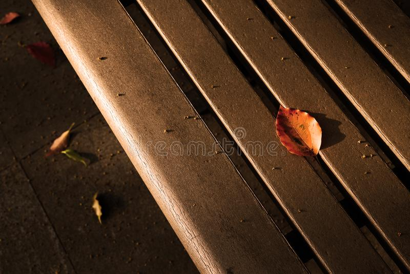 Autumn brilliant yellow leaf on the chair. 。nThe sunset leaves the projection of the leaves on the benchn royalty free stock photos