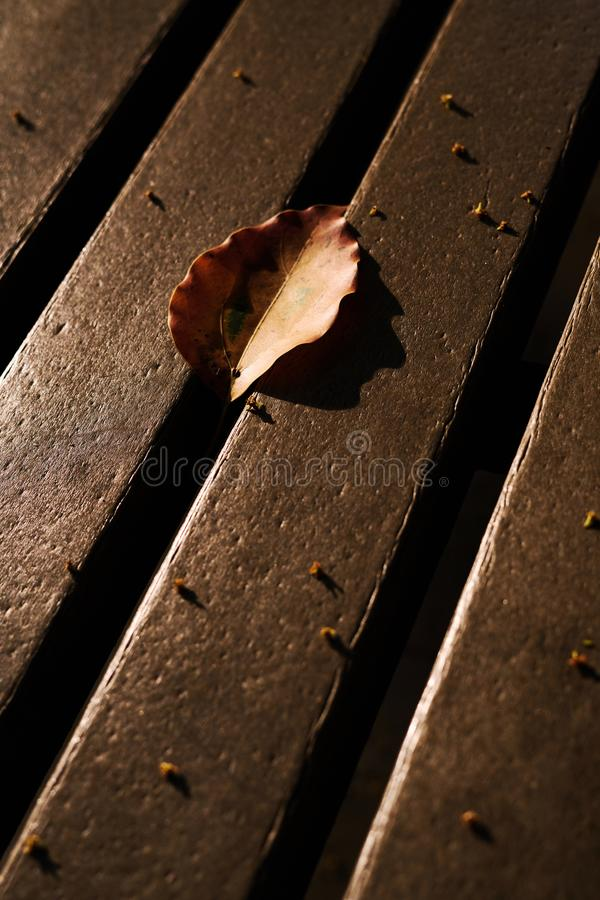 Autumn brilliant yellow leaf on the chair. 。nThe sunset leaves the projection of the leaves on the benchn royalty free stock photo
