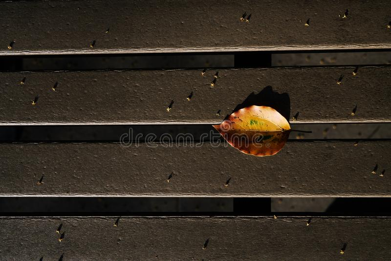 Autumn brilliant yellow leaf on the chair. 。nThe sunset leaves the projection of the leaves on the benchn stock photography
