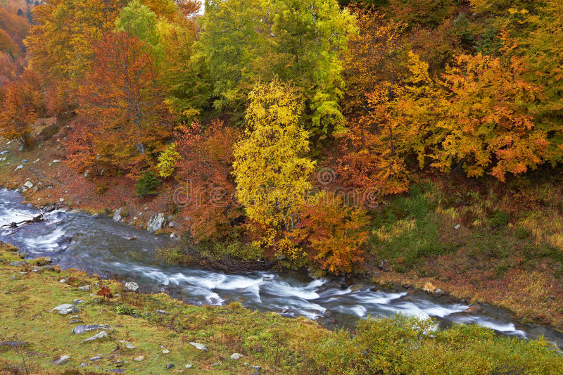 Download Autumn Brook Royalty Free Stock Image - Image: 16483246