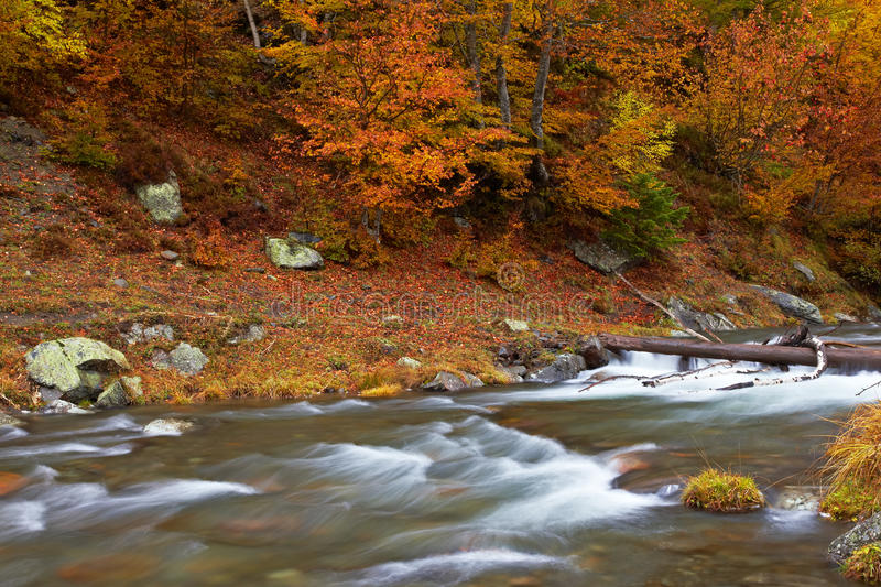 Download Autumn brook stock image. Image of flowing, forest, motion - 16502195