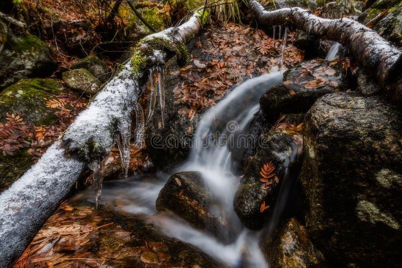 Autumn Brook stock afbeelding