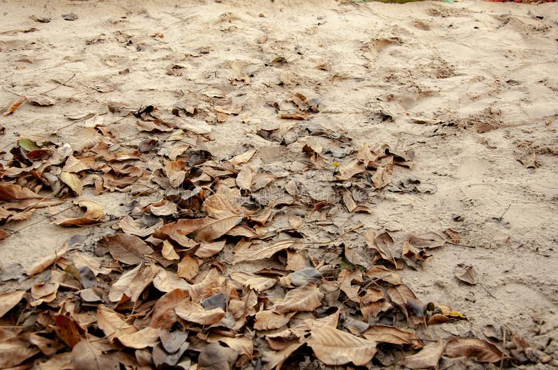 Autumn brown dry leaves in the sand. Autumn brown dry leaves in the sand stock images