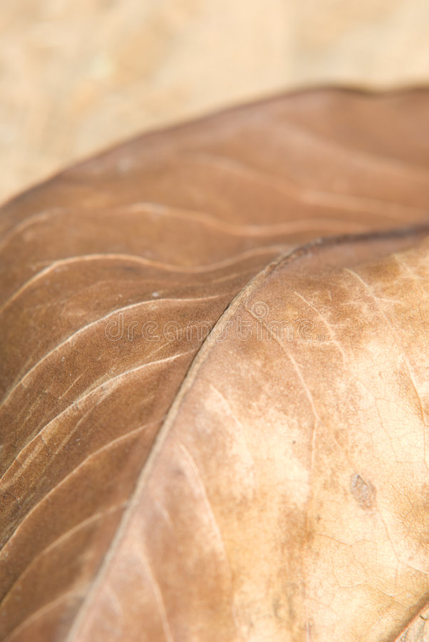 Download Autumn brown leaf stock photo. Image of bright, indian - 5092796