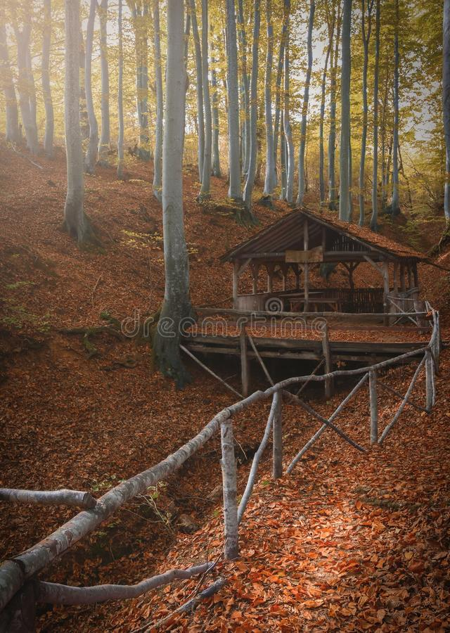 Autumn in the bulgarian forest stock photo