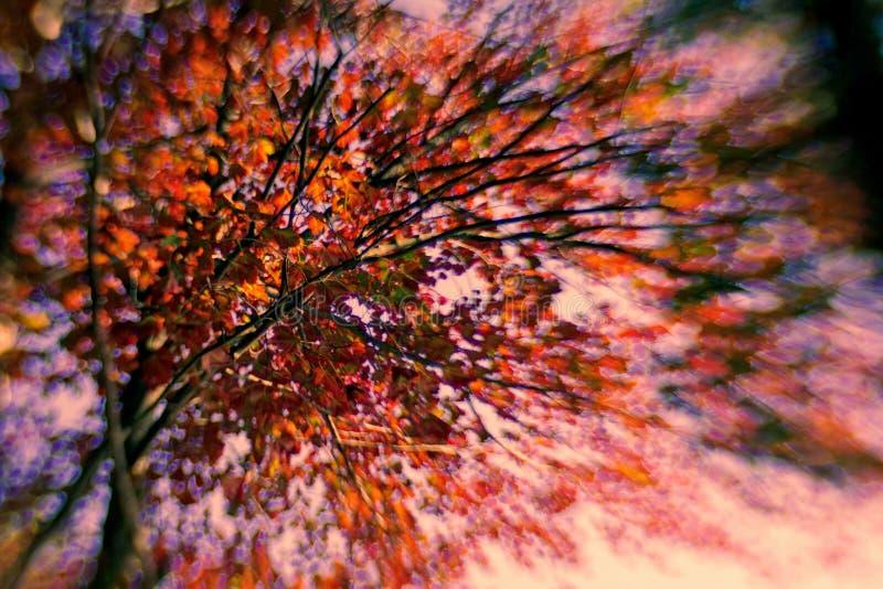 Autumn Burst av färg royaltyfri foto