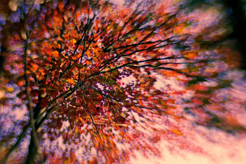 Autumn Burst der Farbe lizenzfreies stockfoto