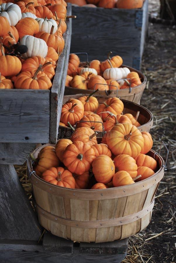 Autumn Bushel Baskets encheu-se com as mini abóboras foto de stock royalty free