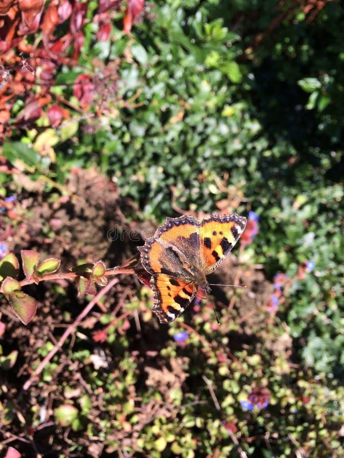 Autumn Butterfly (60216195) images libres de droits