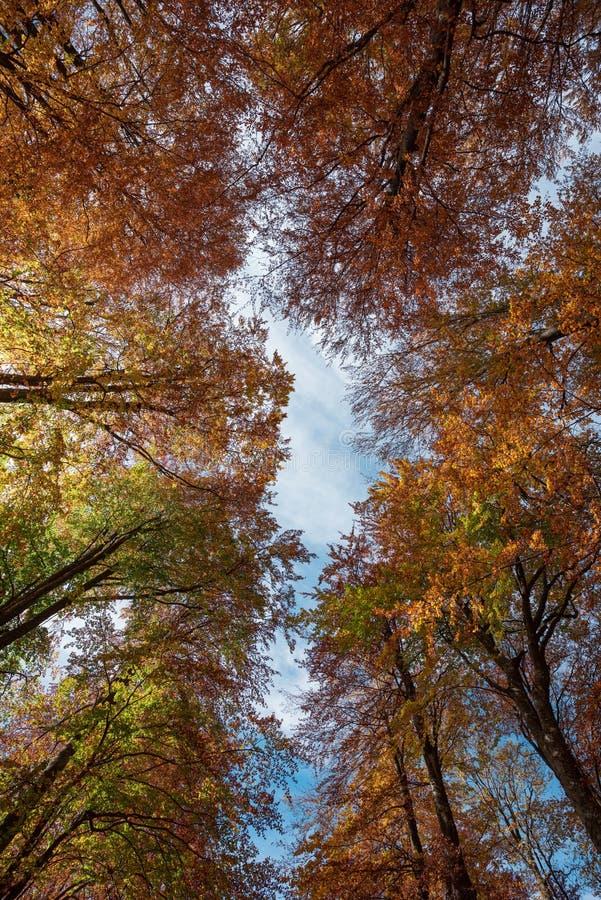 Autumn Canopy foto de archivo libre de regalías