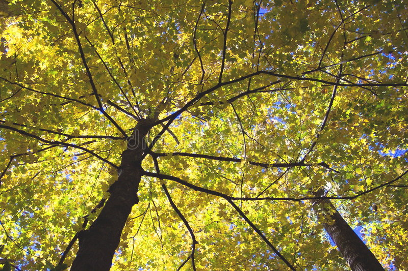 Download Autumn Canopy stock photo. Image of hiking, maryland, fall - 30060
