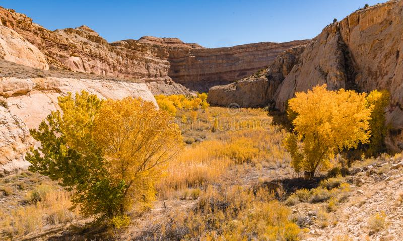 Autumn in Capitol Reef. Fall foliage in Capitol Reef National Park, Utah stock photography