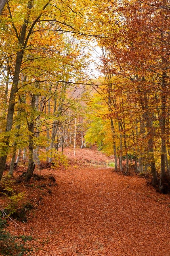 Free Autumn Carpet Royalty Free Stock Photography - 27918847