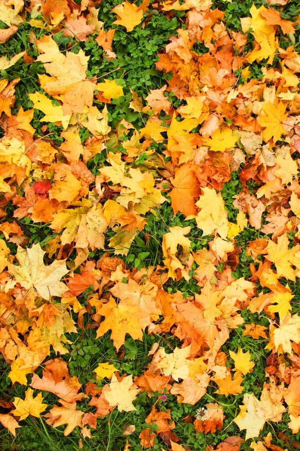Free Autumn Carpet. Royalty Free Stock Images - 6711069