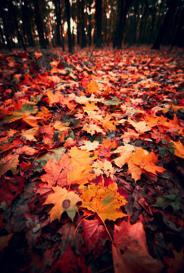 Free Autumn Carpet Of Leaves Stock Photography - 31111502
