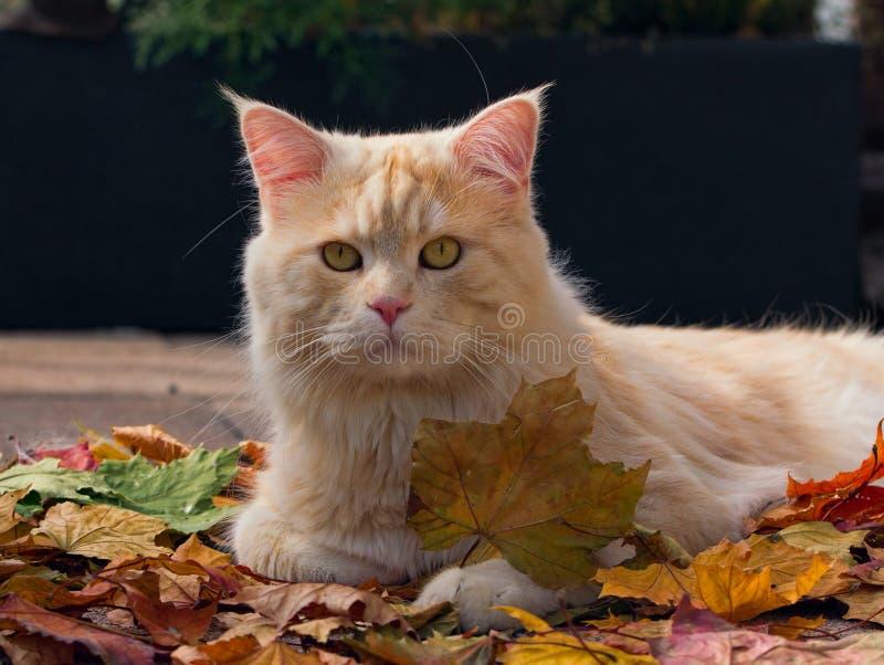 Autumn Cat image stock