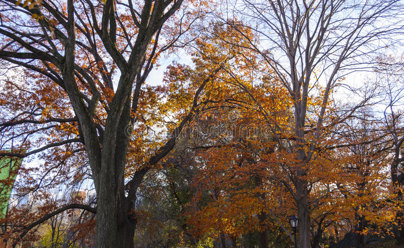 Autumn in Central Park at New York City stock photo