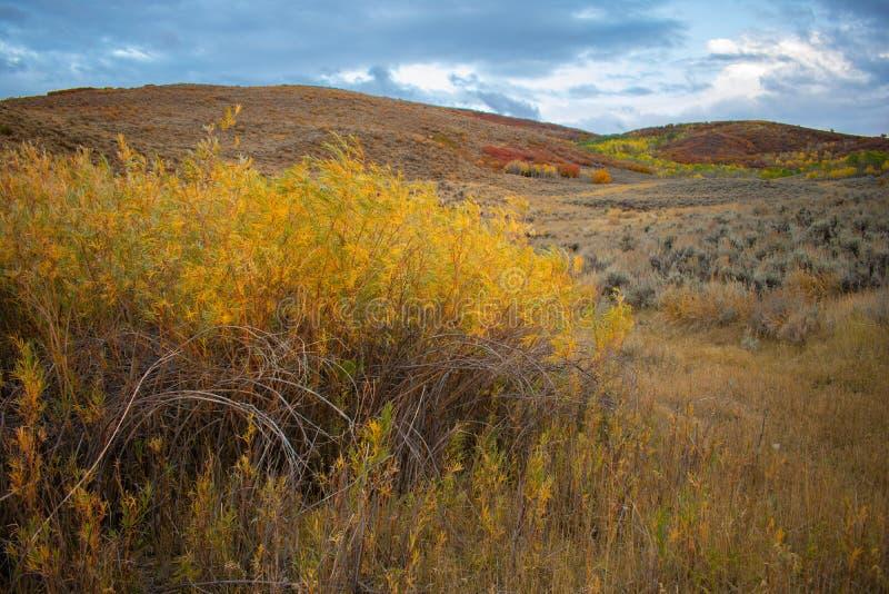 Autumn Chalk Creek Mountainside images libres de droits