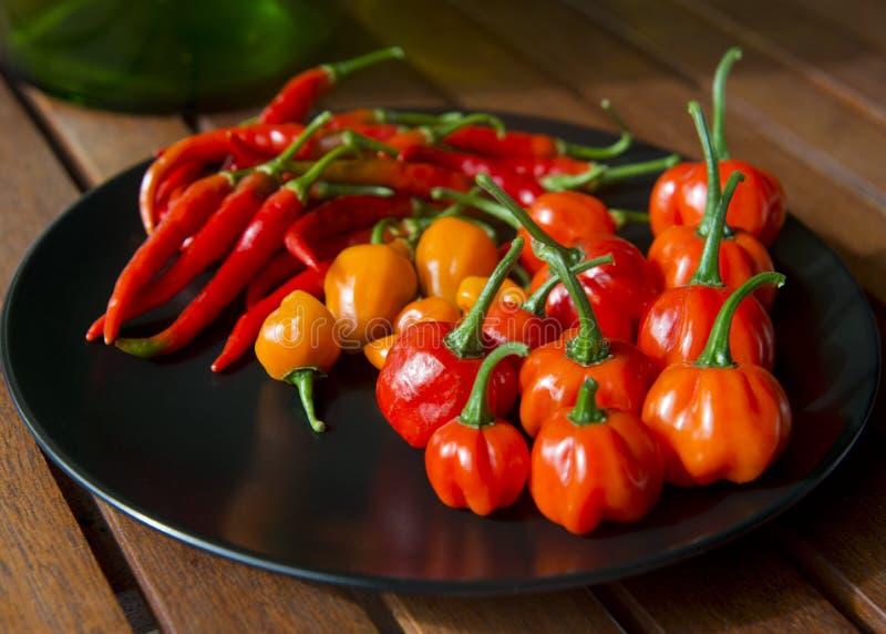 Autumn Chili Harvest imagem de stock royalty free
