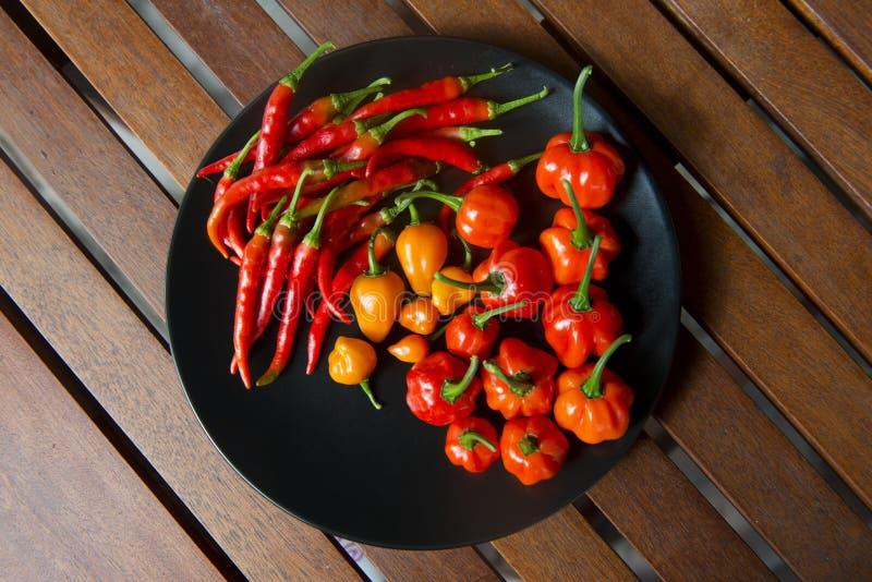 Autumn Chili Harvest fotografia de stock