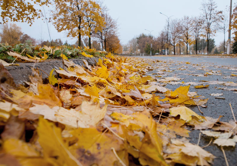 Download Autumn In The City: Defoliation Time Stock Image - Image: 34555849