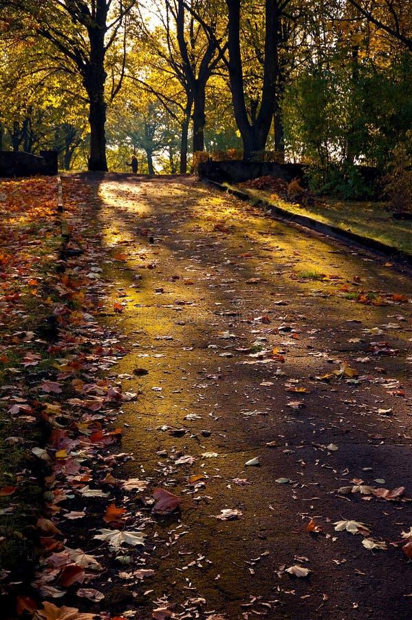 Download Autumn in city garden stock photo. Image of autumn, recreation - 11434808