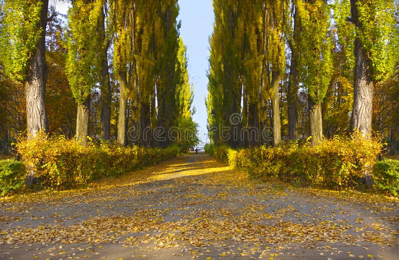 Autumn in the city park. Kiev. stock images