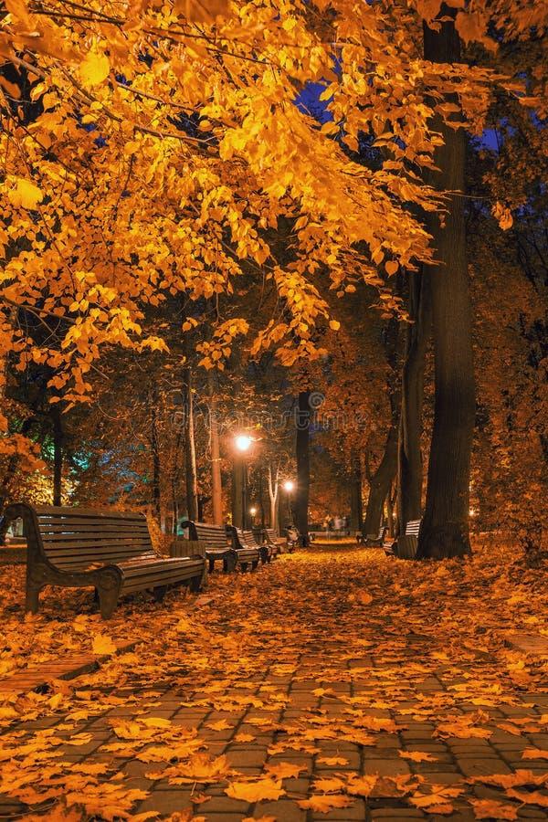 Autumn city park at night. Beautiful autumn city park at night royalty free stock photos