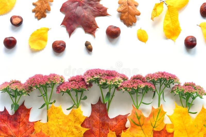 Autumn Closeup Border fotos de archivo