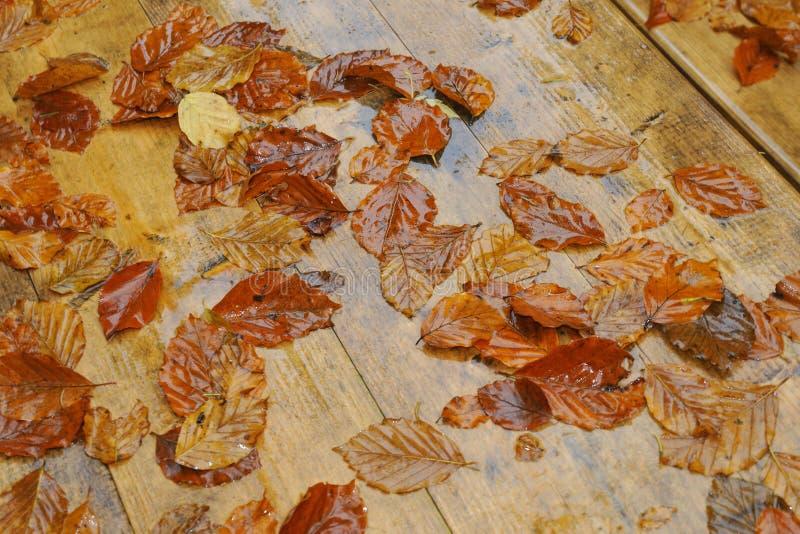Download Autumn stock image. Image of outdoor, green, orange, bank - 34628919