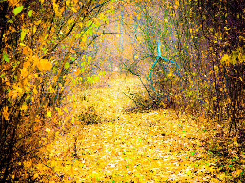 Autumnal forest road. Autumn cloudy day, autumnal deciduous forest and road covered with dry fallen leaves stock photos