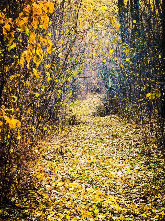 Autumnal forest road. Autumn cloudy day, autumnal deciduous forest and road covered with dry fallen leaves, vertical shot stock photo