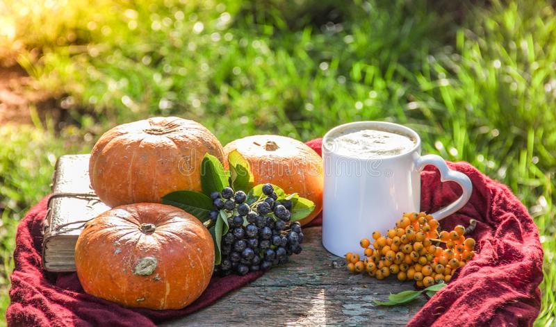 Autumn coffee. Pumpkin latte. Coffee in the autumn garden. Coffee mug, pumpkin and mountain ash. Seasons and weekends stock photo