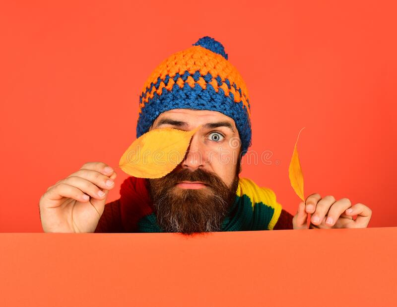 Autumn and cold weather concept. October and November time. Idea. Hipster with beard and surprised face closes eyes with leaf. Man in hat holds cherry tree stock photos