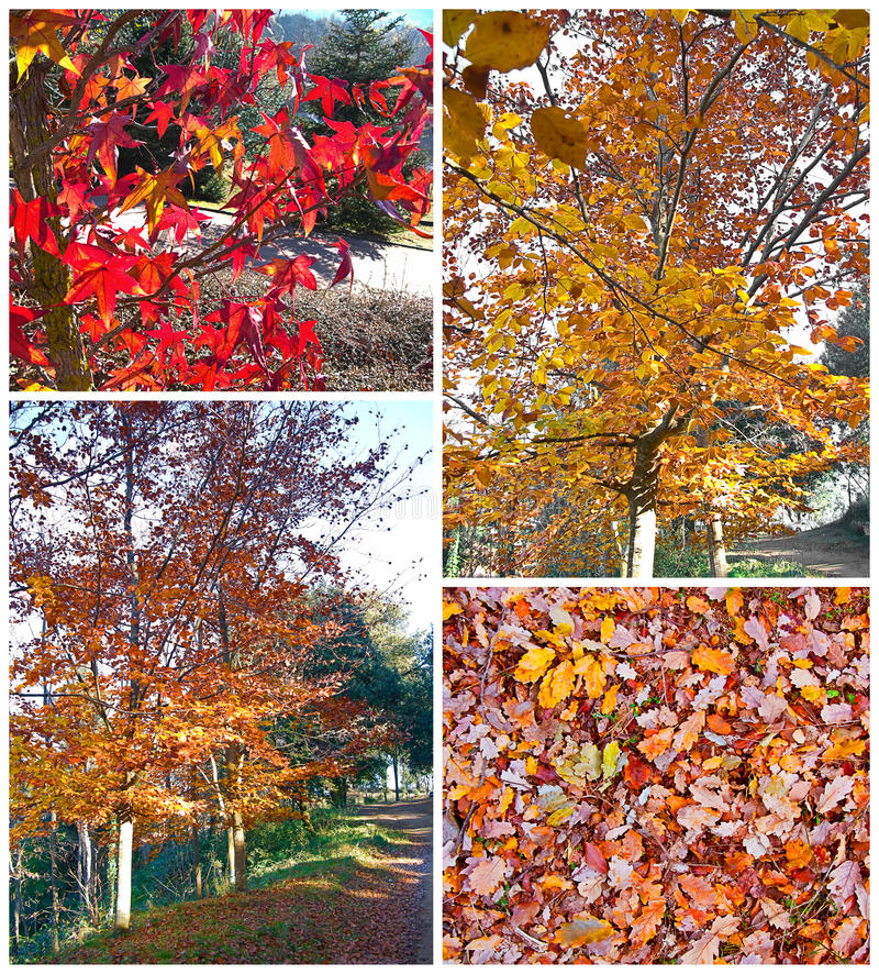Download Autumn collage stock image. Image of forest, colour, natural - 19523893