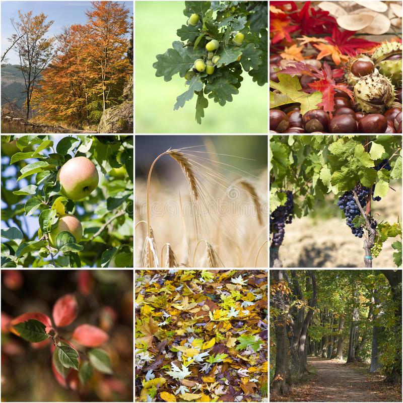 Download Autumn collage stock photo. Image of yellow, autumnal - 21502544
