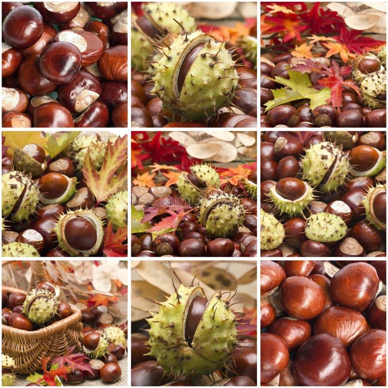 Autumn collage stock image