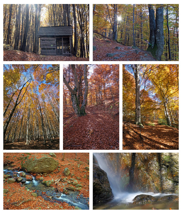 Autumn collage stock image