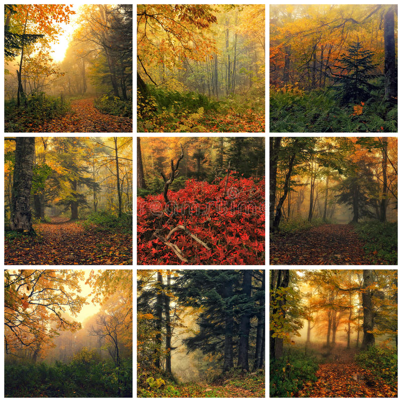 Autumn. Collage made of images of fantasy autumn forest royalty free stock photo