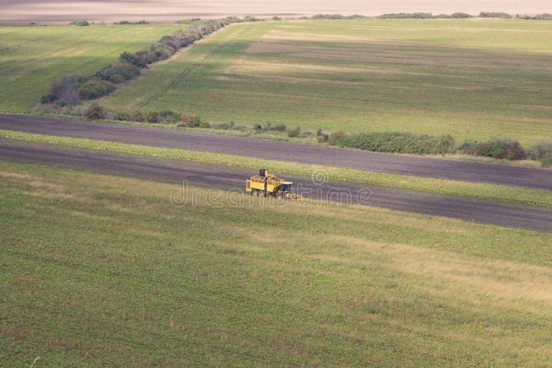 Aerial view harvesting beets ,combine harvesters harvest of sugar beet,Autumn collection of beets in the field combine. Autumn collection of beets in the field stock images