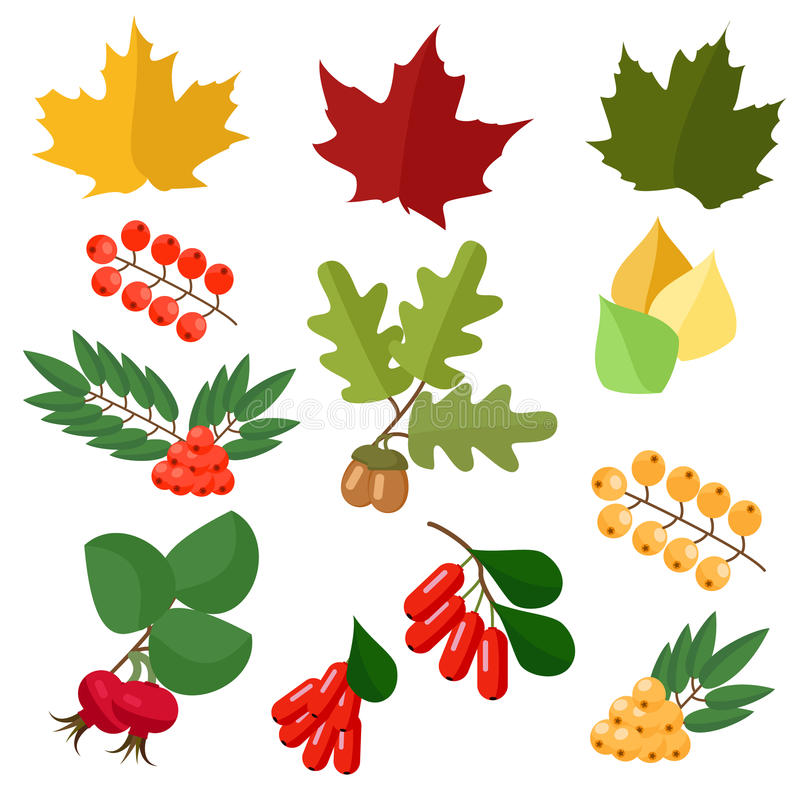 Autumn collection of leaves and berries wild rose and barberry vector illustration