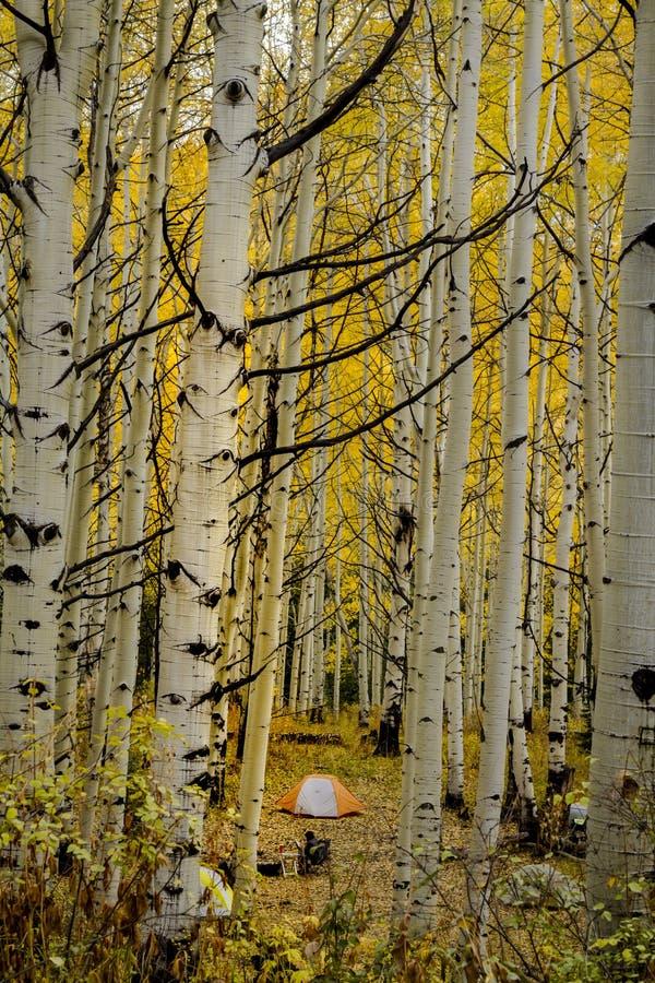 Autumn Color à San Juan et Rocky Mountains du Colorado photographie stock