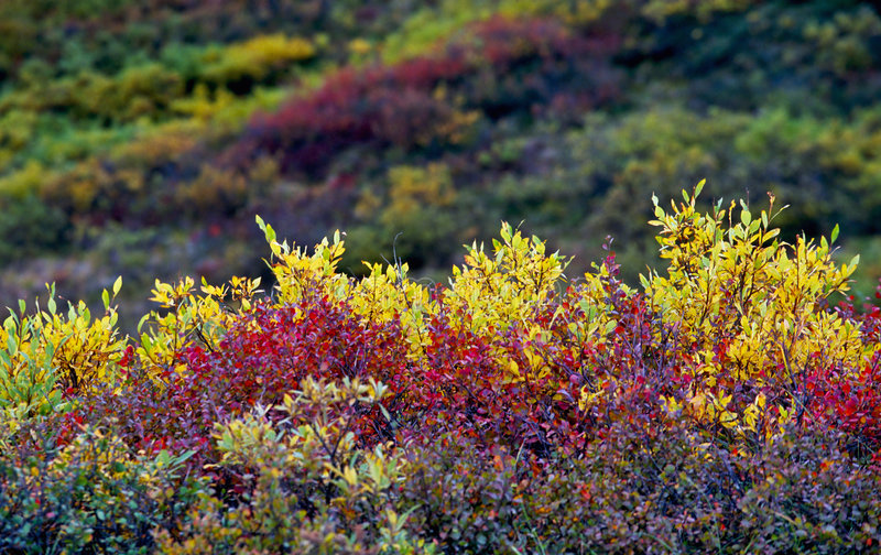 Autumn color. On the hillside royalty free stock photo