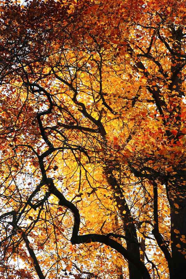 Download Autumn color stock image. Image of natural, tree, outdoor - 6863171