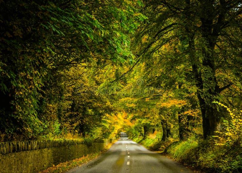 Autumn Color immagini stock