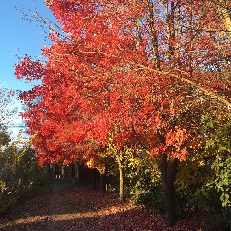 Autumn Color imagen de archivo