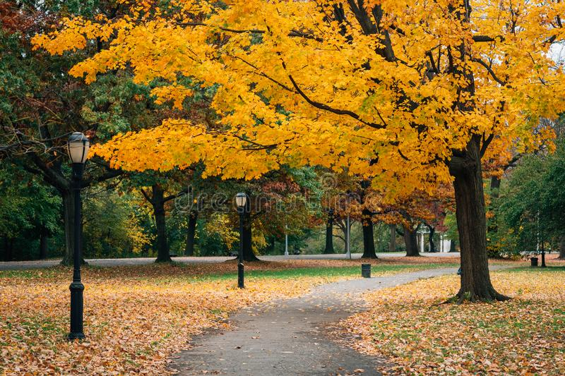 Autumn color along a walkway at Prospect Park, in Brooklyn, New York City. Aun color along a walkway at Prospect Park, in Brooklyn, New York City stock images