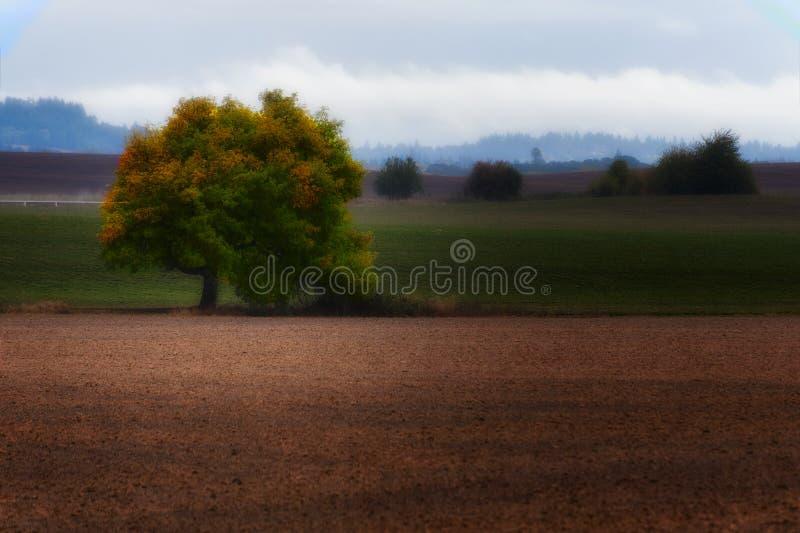 Autumn Color begint draaiend bladeren royalty-vrije stock fotografie