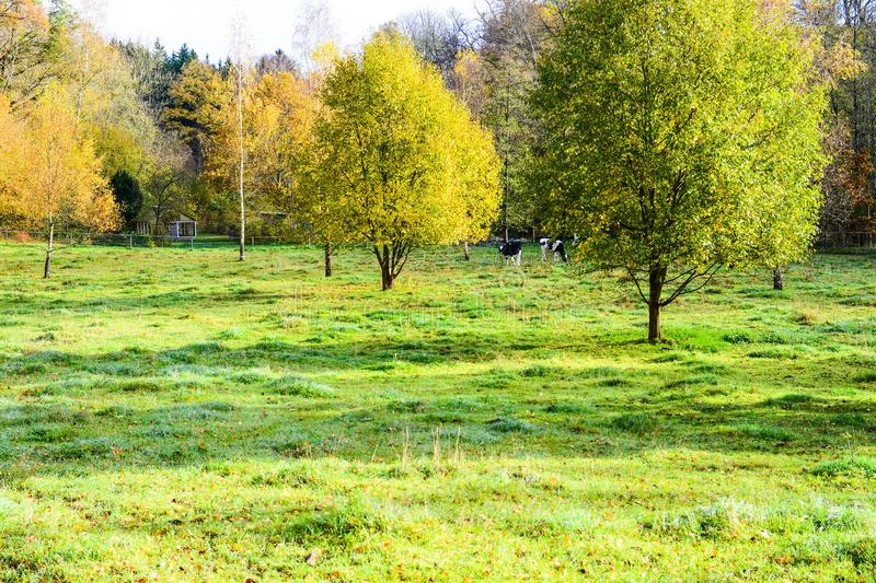 Autumn color in the cold morning the trees are full of beautiful leaves. The last days the leaves are beautiful in dark beautiful colors, the forest stands and stock photo