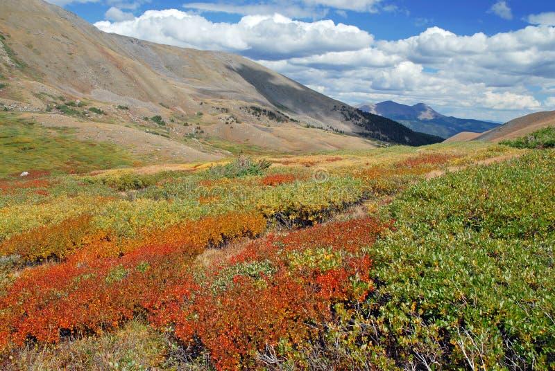 Autumn Color in de Sawatch-Waaier, Colorado Rockies, de V.S. royalty-vrije stock foto's